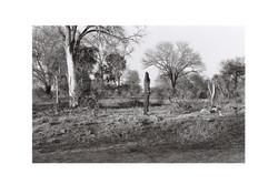Burnt Bark 2, Kruger Park 2016