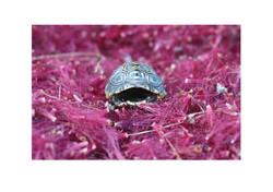 Tortoise Broken Home, Hout Bay 2015