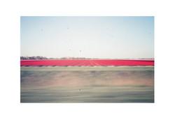 Tulip Fields, Amsterdam 2016