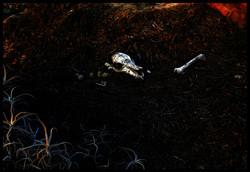 Skeletons in the Desert - Series 04