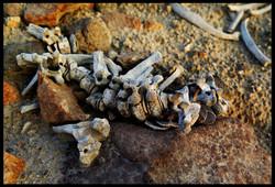 Skeletons in the Desert - Series 01