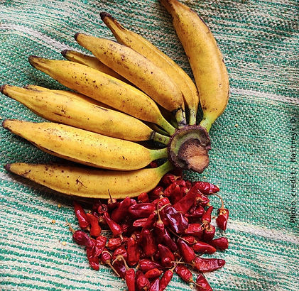Harmal Chillies, Moira bananas, Khaje of Goa gets GI tag