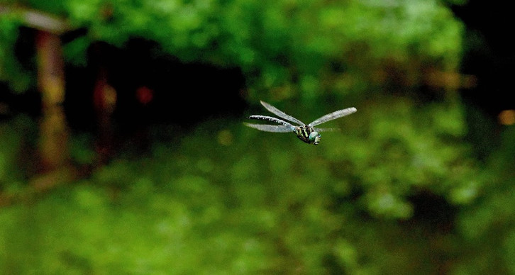 Kerala to host first-ever Dragonfly Festival