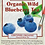 Thumbnail: Organic Wild Blueberry