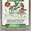 Thumbnail: Rosehip