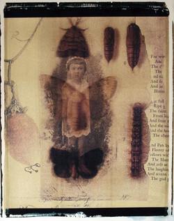 XV. Moth Child