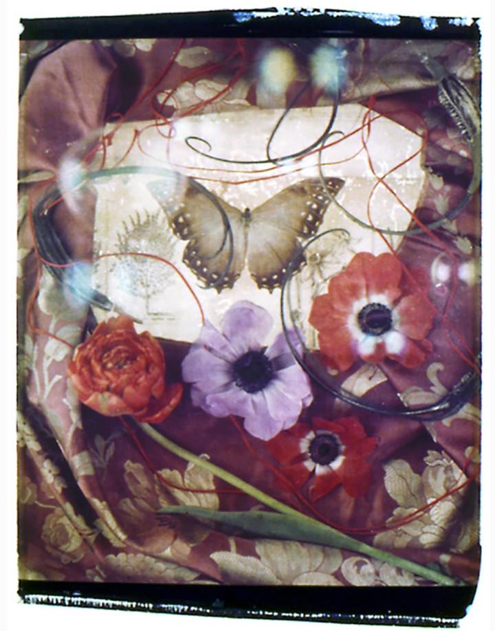 Windflowers.jpg