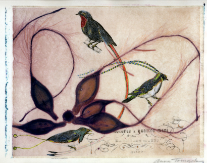 BirdsParadise