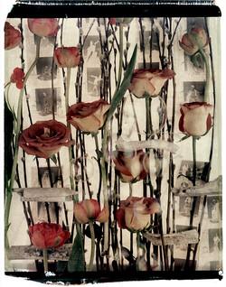 River Bones and Roses