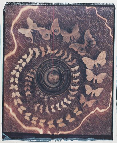 Moth Circle II