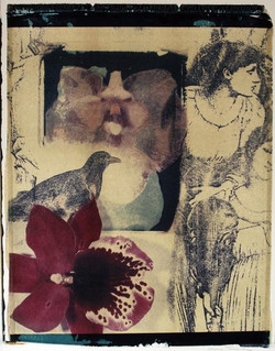 XVII. Orchid Crow