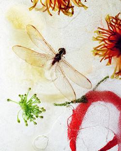 Zinnia & Dragonfly II