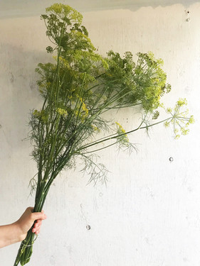Dill-Bouquet