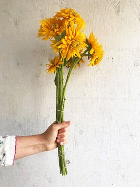 Rudbeckia-Gloriosa