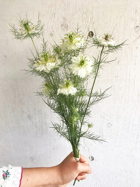 Nigella-Cramers-Plum-Loco