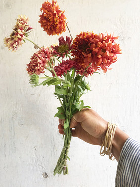 Blanket-Flower-Lorenziana