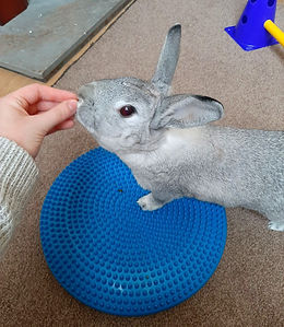 Rabbit Physiotherapy