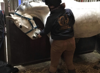 4 simple stretches to improve your horses flexibility