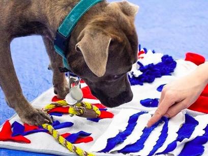 Canine Enrichment - Guest Blog Post