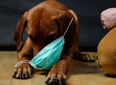 Pandemic Pups - Guest Blog by Digs for Dogs