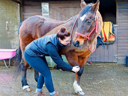 What is Veterinary Physiotherapy?