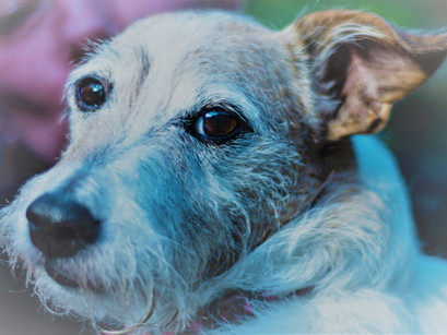 Caring for an Older Dog Top 5 Tips