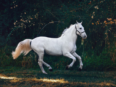 Can a Vet Physiotherapist Help a Horse After Injury?