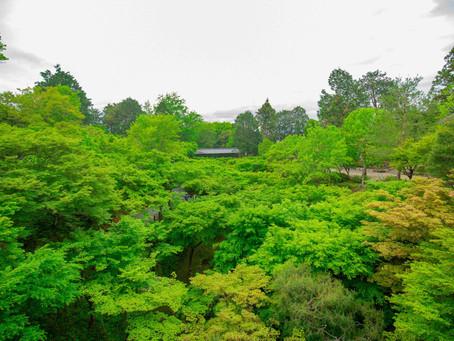 京散策-綠京都