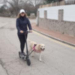 bike-and-dog_scooter.jpg