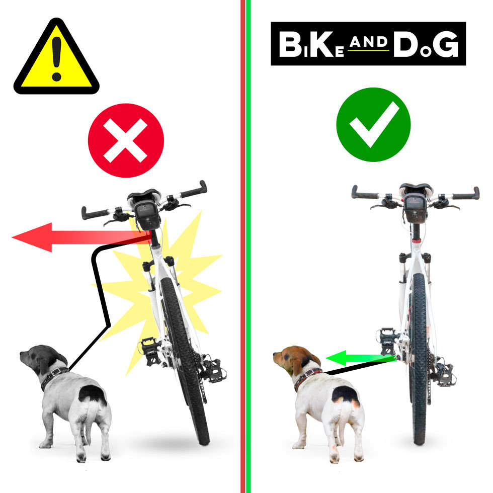 bike-and-dog-ok.jpg