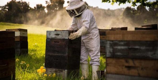 Visite des ruches - Aux Délices de Maya - Samedi 19 Juin 2021 - 15h