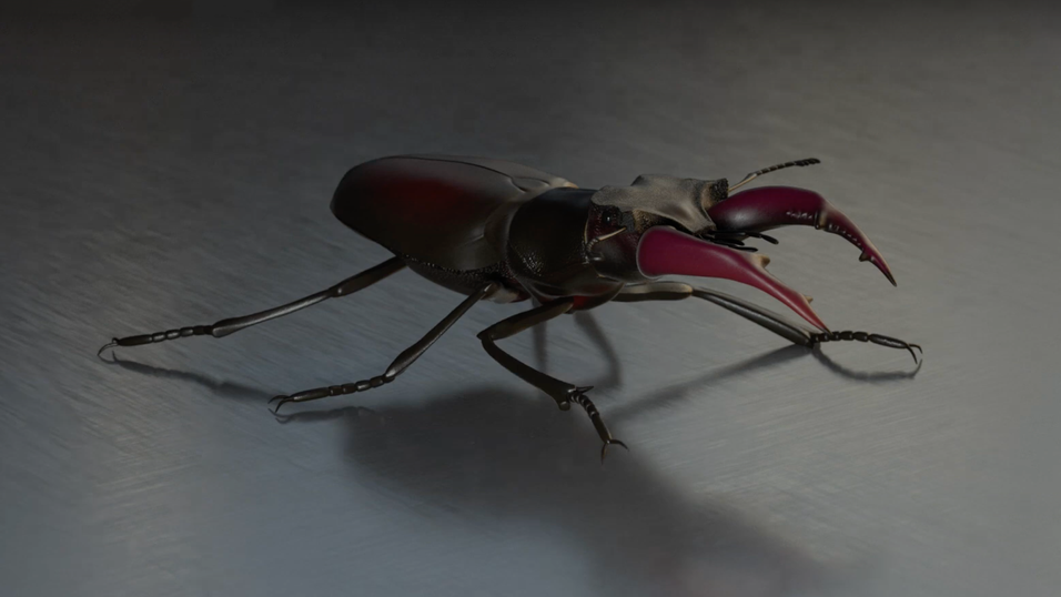 Stag Beetle Rig Texture and Walk