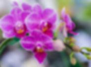 orchid-flower.jpg