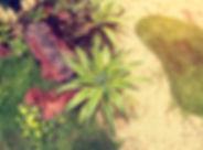 agave-plant.jpg