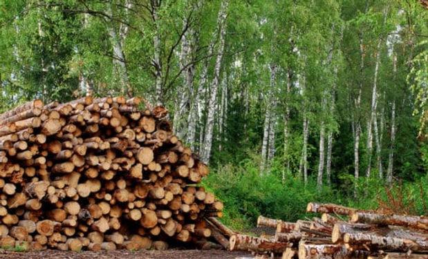 logs-540x540.jpg