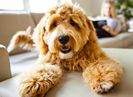 10 Furniture-inspired pet names in the time of COVID-19