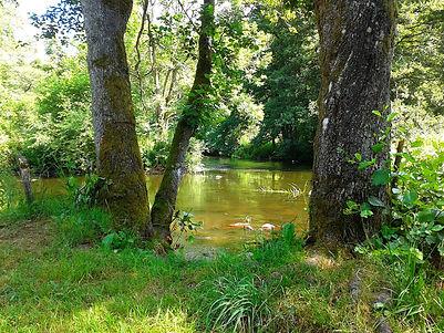 river-ronne-998455_1920.jpg