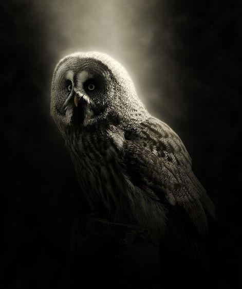 owl-1996169_1920.jpg