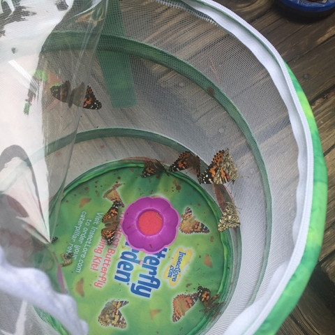 Releasing our butterflies