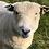 Thumbnail: Pure Ryeland Aran Yarn