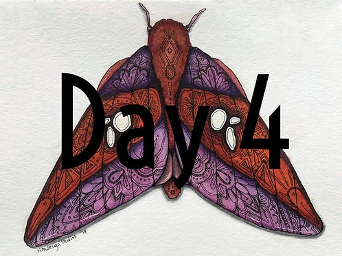 Pink Striped Oakworm Moth ORIGINAL Watercolor and Pen & Ink by Haylee McFarland
