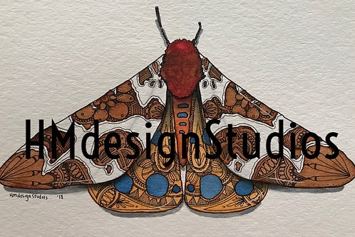 Garden Tiger Moth  PRINT Watercolor and Pen & Ink by Haylee McFarland
