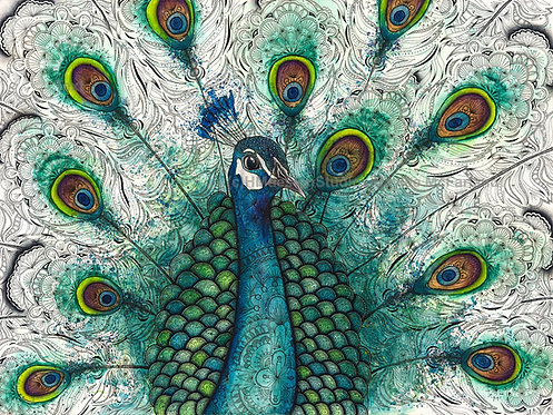 Peacock Print, Watercolor and Pen and Ink by Haylee McFarland