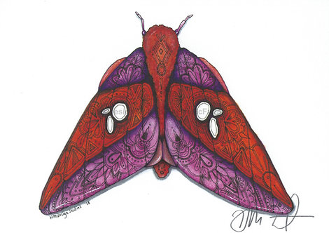 Pink Striped Oakworm Moth PRINT Watercolor and Pen & Ink by Haylee McFarland