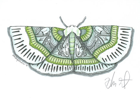 Lotaphora Admirabilis Moth PRINT Watercolor and Pen & Ink by Haylee McFarland