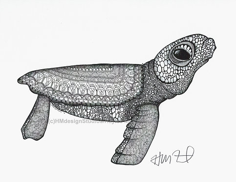 Black and White Baby Sea Turtle Print, Pen and Ink by Haylee McFarland