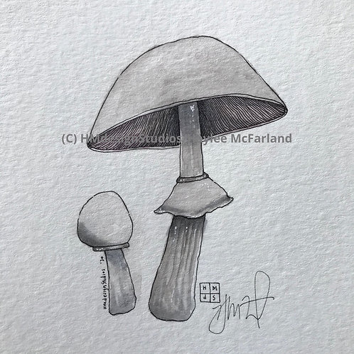Mushroom Mini ORIGINAL, Watercolor and Pen & Ink by Haylee McFarland