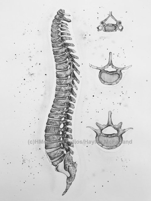 Black and White Spine Print, Watercolor and Pen & Ink, by Haylee McFarland