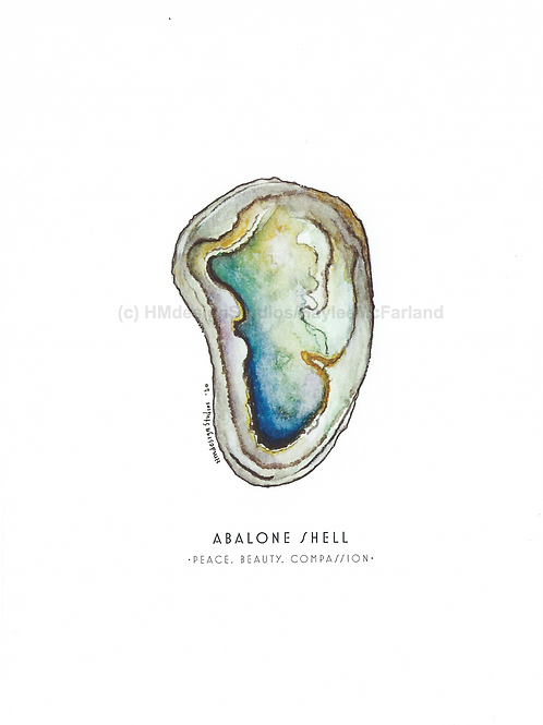 Abalone Shell Greeting Cards, Watercolor and Pen & Ink by Haylee McFarland