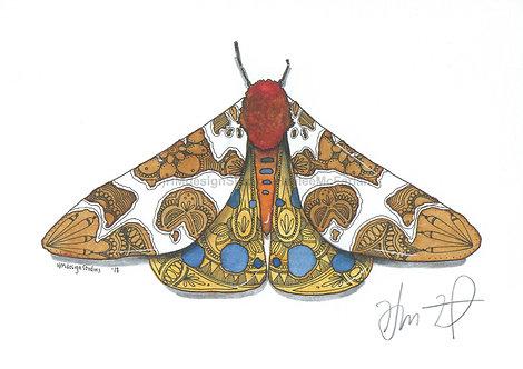 Garden Tiger Moth  PRINT Watercolor and Pen & Ink by Haylee McFarland